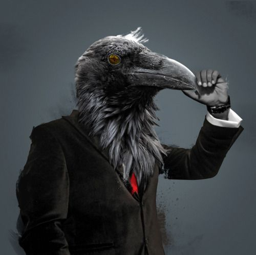 Kro%20-%20suit%2C%20scratching%20beak.jpg